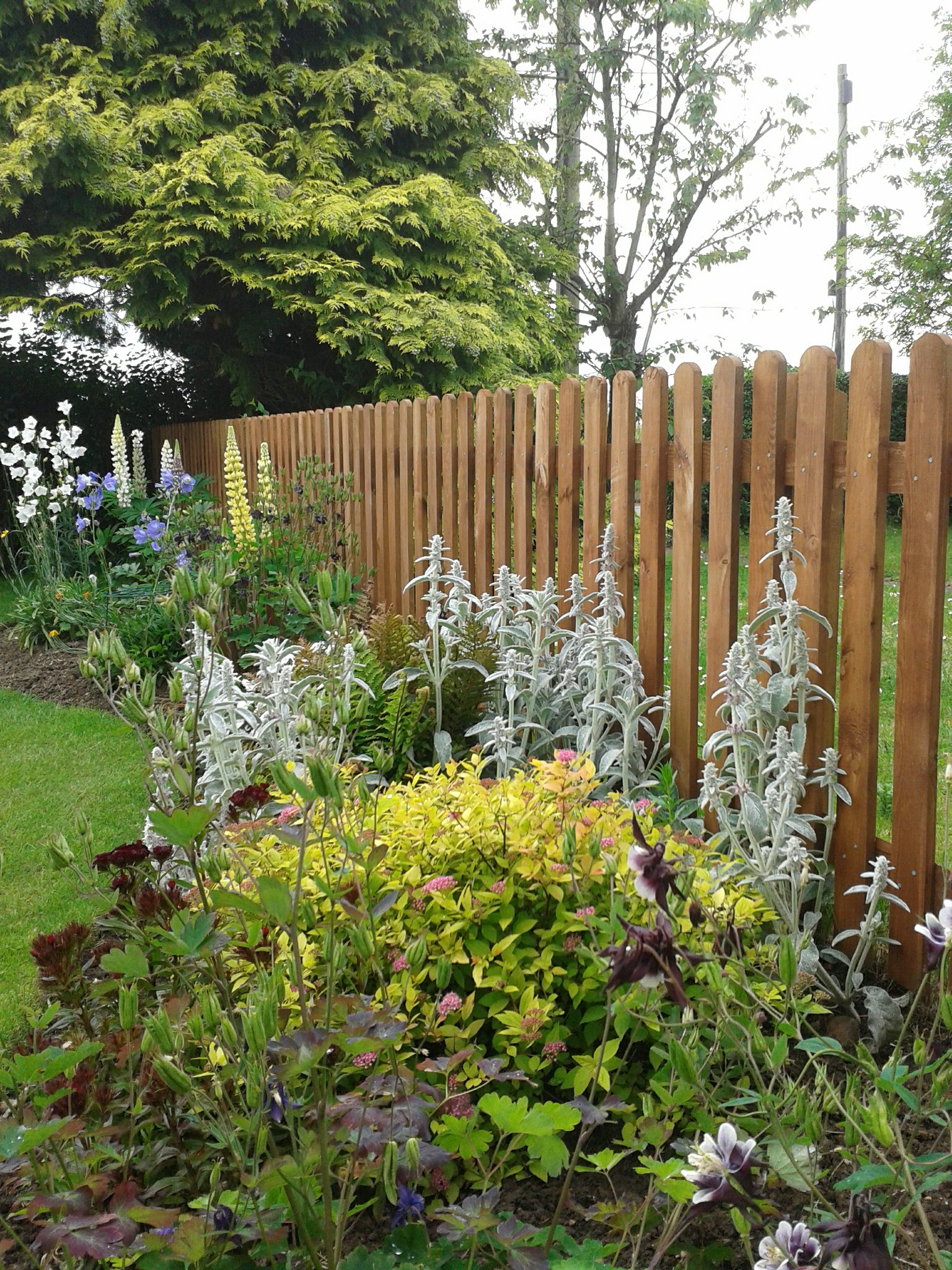 Round top planed Picket fencing finished in Barretine Summer tan