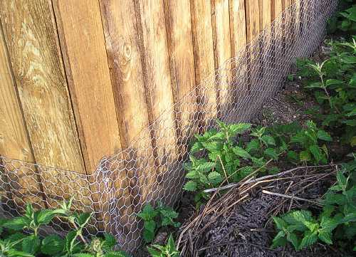 Rabbit netting on Closeboard